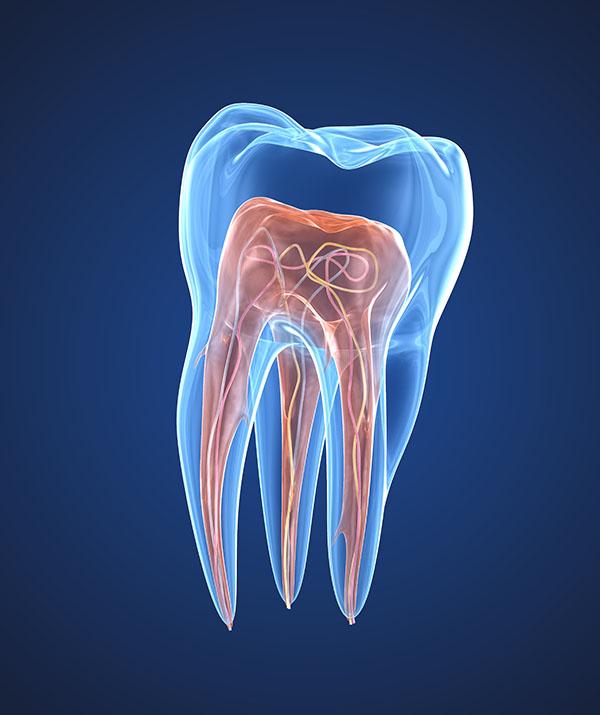 Endodontie Saint-Germain-en-Laye